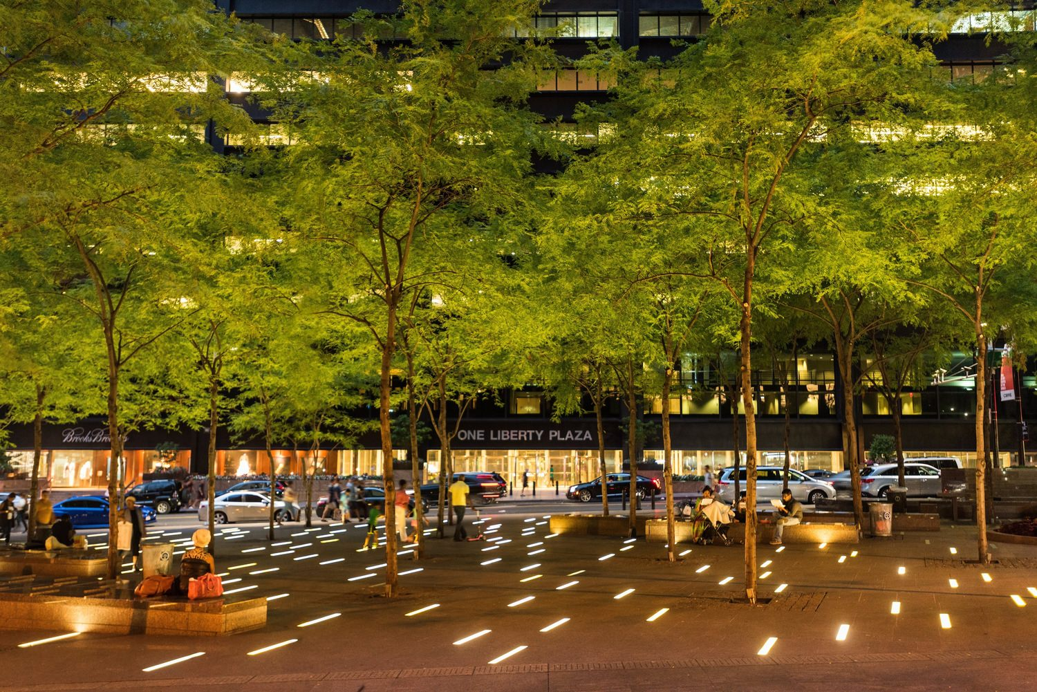 Outdoor image of a city in the evening time ,  street with several trees and cars are seen