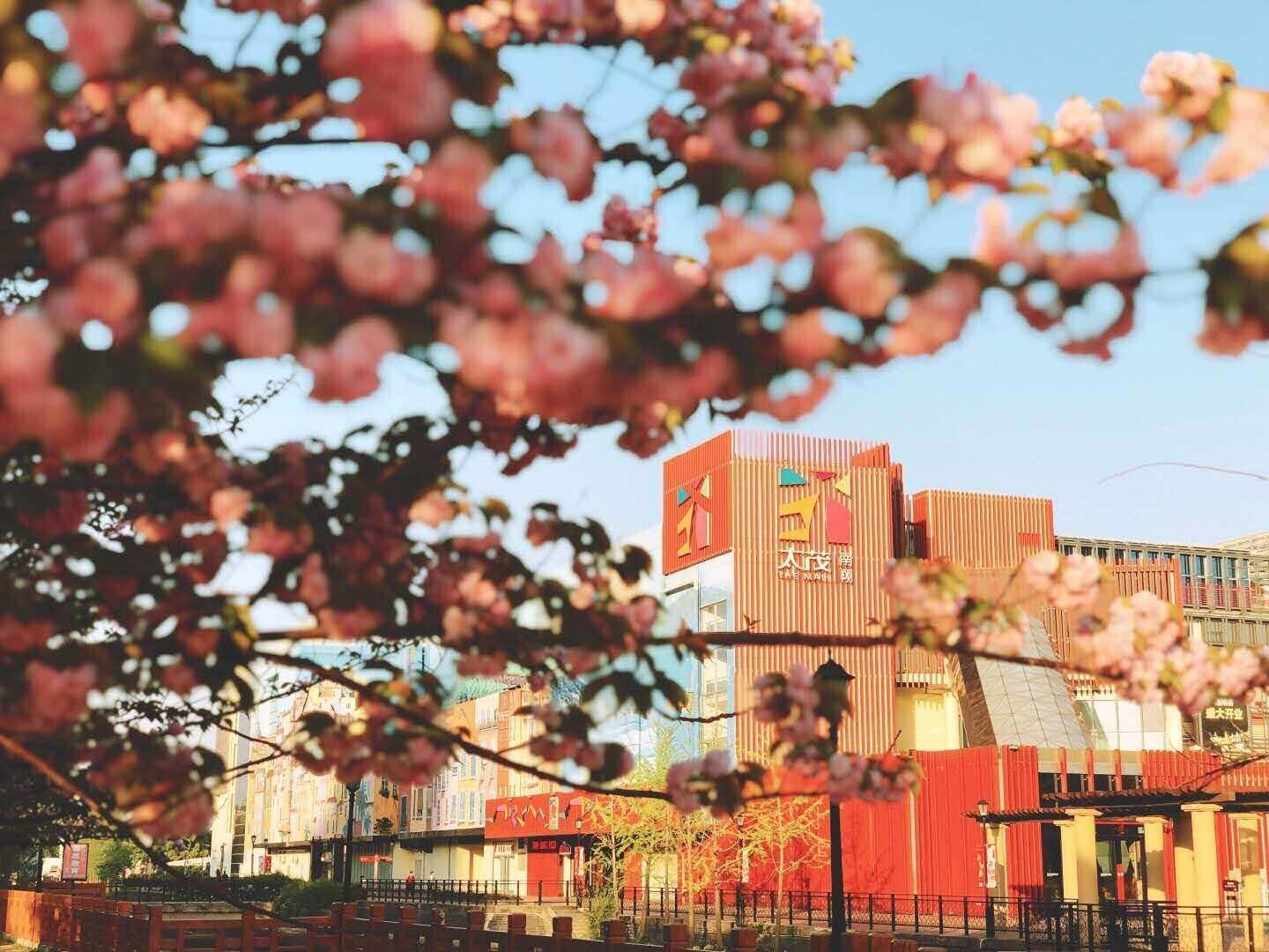 A collection of buildings that are near some trees that have pink flowers on them on a sunny day.